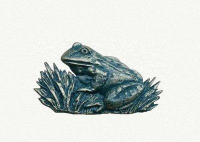 motif-frog